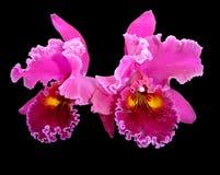 Orchidée sur le noir photos stock