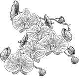 Orchidée Tiré par la main dessins photos libres de droits