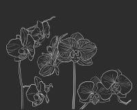 Orchidée tirée par la main sur le noir Photos stock