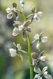 Orchidée, une des plus grandes familles botaniques Photo stock