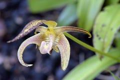 Orchidée, une des plus grandes familles botaniques Image stock