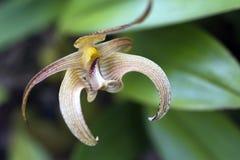 Orchidée, une des plus grandes familles botaniques Photographie stock