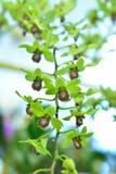 Orchidée verte Images libres de droits