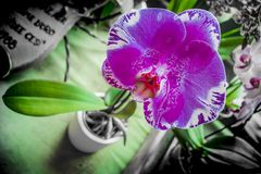 Orchidée violette photos stock