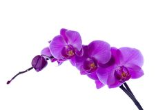 ORCHIDÉES Images stock