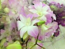 orchidées Photos stock
