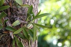 orchidées Image stock