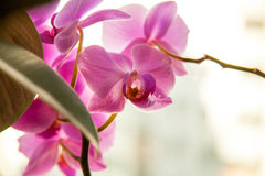 orchidées Photographie stock