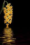 Orchidées au-dessus de réflexion de l'eau Photo stock