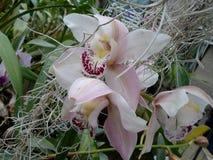 Orchidées blanches, fleurs blanches, fleurs exotiques Images libres de droits