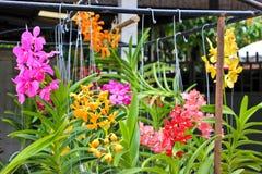 Orchidées colorées Image libre de droits