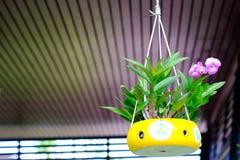 Orchidées cultivées dans des pots en céramique accrochant dans le café Photographie stock