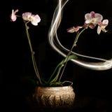 Orchidées d'isolement avec la peinture légère Photographie stock libre de droits