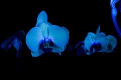 Orchidées dans l'obscurité Image libre de droits