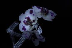Orchidées dans l'obscurité Photo stock