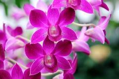 Orchidées dans le jardin botanique à Londres Photo libre de droits