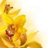 Orchidées dans les baisses Photographie stock libre de droits