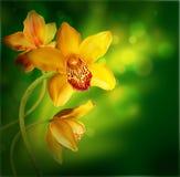 Orchidées dans les baisses Images libres de droits