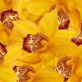 Orchidées dans les baisses de la rosée Photographie stock libre de droits