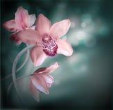 Orchidées dans les baisses de la rosée Photos libres de droits