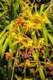 Orchidées dans un beau jardin chez Monte au-dessus de Funchal Madère Photo libre de droits