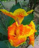 Orchidées dans un jardin du Mékong, Vietnam Image stock