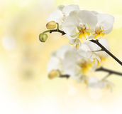 Orchidées de floraison de branchement Photos stock