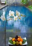 Orchidées de floraison de branchement et fruit de panier un plein Photographie stock libre de droits