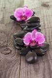 Orchidées de mite fuchsia et pierres noires sur la plate-forme superficielle par les agents Photo stock