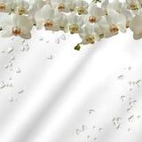 Orchidées et diamants Photographie stock libre de droits