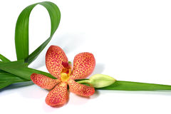 Orchidées fraîches Photos stock