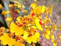 Orchidées lumineuses Photos stock