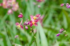 Orchidées moulues Photos libres de droits
