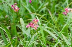 Orchidées moulues Photographie stock