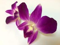 Orchidées pourprées Photo libre de droits
