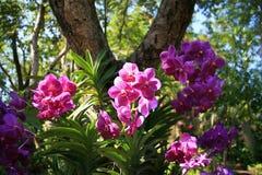 Orchidées pourprées Photo stock