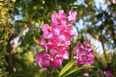 Orchidées pourprées et roses Images stock