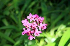 Orchidées pourpres avec le rose image libre de droits