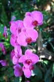 Orchidées pourpres avec le rose photographie stock
