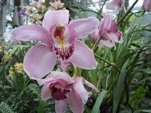 Orchidées pourpres, fleurs pourpres, fleurs tropicales Images stock