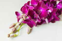 Orchidées pourpres sur la tuile en pierre Photo libre de droits