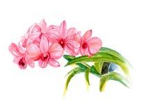 Orchidées roses d'isolement sur le fond blanc, illustration de main illustration stock