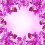 Orchidées roses dans les baisses Photo stock