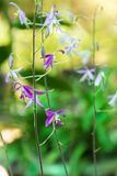 Orchidées sauvages Photographie stock