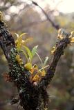 Orchidées sauvages Photos stock