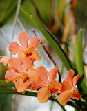 Orchidées sous l'éclairage naturel Photographie stock