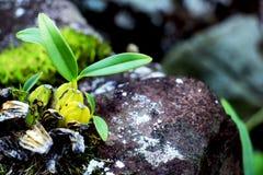 Orchidées sur la roche Image stock