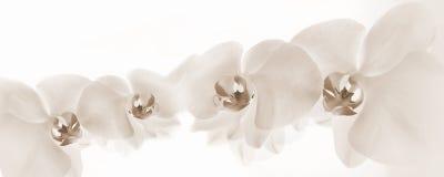Orchidées sur le fond clair Photos stock
