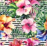 Orchidées tropicales de ketmie de fleurs de bel été de fines herbes floral tropical coloré tendre merveilleux sophistiqué lumineu Photos stock