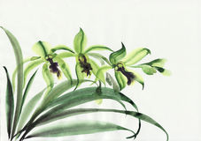 Orchidées vertes Photos stock